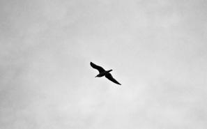 bird-691026_1280