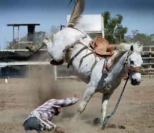 rodeo-horse-white-horse-action-shot.jpg
